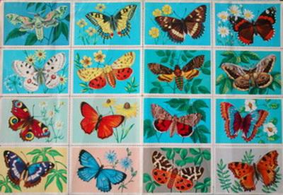 Lepkék - pillangók