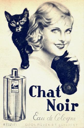 Chat Noir kölni
