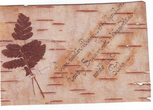 Első világháborús fakéregre írt levél az orosz frontról